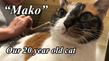 我が家の20歳猫をご紹介します